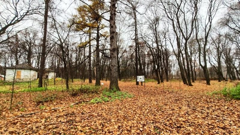 Старый парк Троекурово осенью 2019 года (Фото Дубинина Р.В.)