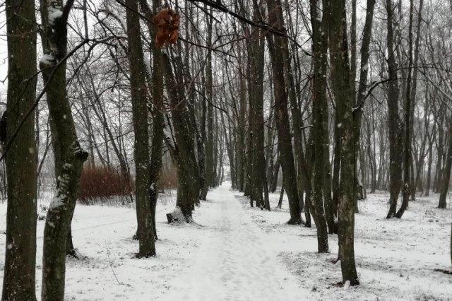 Старый парк в Троекурово (февраль 2020)